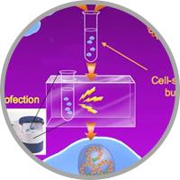Amaxa Nucleofection